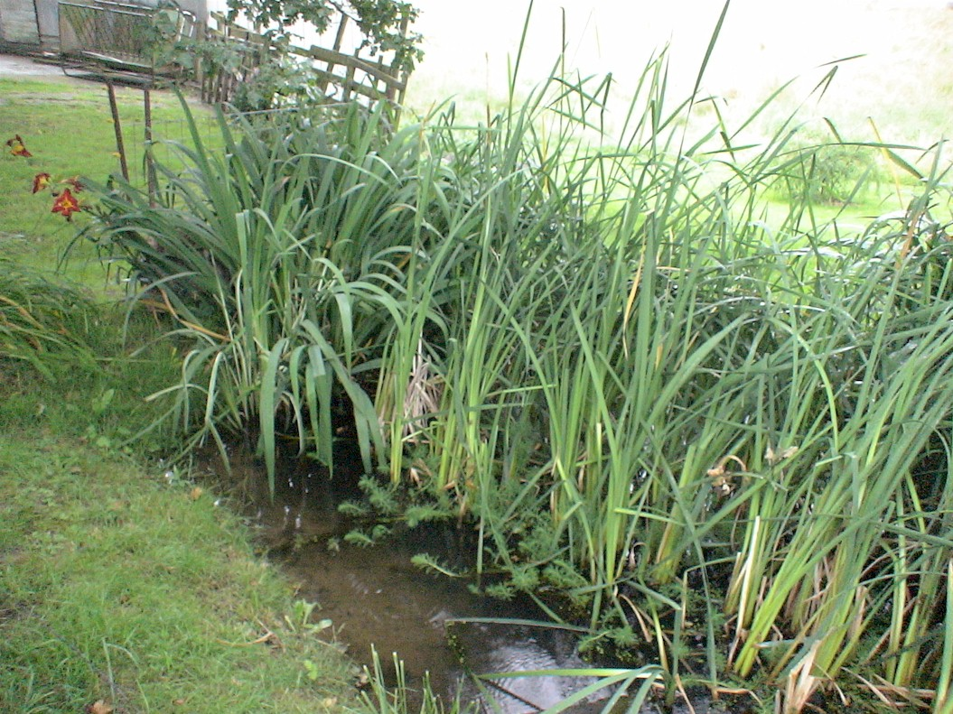 Aquatic plant aquatic plant farm for Water filtering plants for ponds